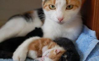 30 de pisici care se mândresc cu puii lor. Sunt adorabile!