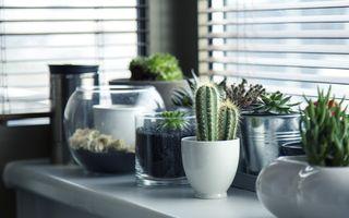 Ce se întâmplă dacă pui oțet pe plante