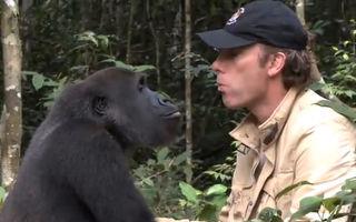 Video. A crescut o gorilă și a eliberat-o. După 5 ani, s-au întâlnit în sălbăticie
