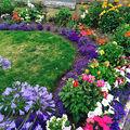 7 moduri ingenioase de a folosi pudra de talc în grădina ta