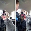 Și-au dorit ca pisicile și câinii să trăiască fericiți împreună. 30 de imagini amuzante