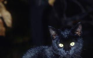 Ceasul bun, pisica neagră: Mâţa ciudată de care se feresc toţi şi-a găsit stăpân
