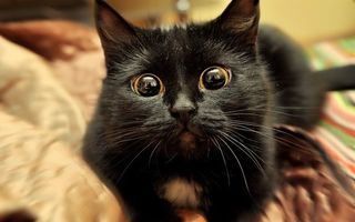 20 de pisici care ar merita un Oscar: Reacţiile lor stârnesc hohote de râs