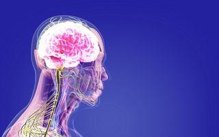 15 lucruri uimitoare despre organismul uman
