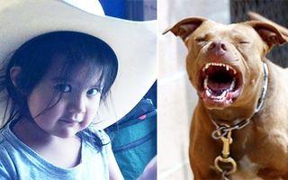 Cei mai buni prieteni: Doi câini au apărat o fetiţă de un şarpe