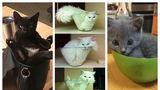 30 de pisici care demonstrează că nu au nevoie de un pat. Ele se înghesuie oriunde!