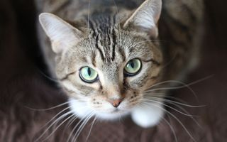 Cum să descifrezi comportamentul pisicilor. 10 gesturi și semnificația lor