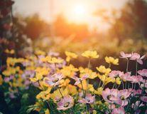 9 moduri uimitoare de a folosi apa oxigenată în grădina ta