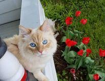 Ea e Sochi, pisica cu cei mai mulți prieteni. Îi atrage ca un magnet!