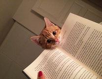 Pisicile educate: 23 de dovezi care arată că le place cartea