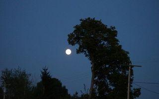 32 de imagini ciudate în care copacii par altceva