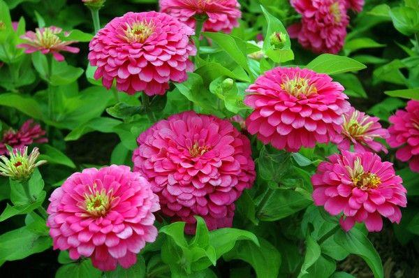 10 Flori De Grădină Pentru Incepători Sunt Frumoase și Rezistente