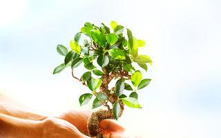 Legendele populațiilor indigene au dus la o descoperire uimitoare: plantele pot auzi!