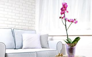 4 plante care aduc bunăstare, iubire și sănătate în casa ta