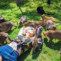 Au descoperit Raiul şi e pe Pământ! Iubitorii de pisici vor fi fascinaţi