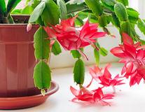 9 plante care purifică aerul din casă