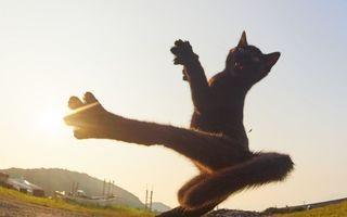 Mâţele ninja: 35 de dovezi că pisicile ştiu arte marţiale