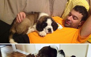 Ce se întâmplă când nu îţi dai seama cât eşti de mare! 100 de imagini amuzante cu câini