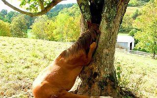 Copacii care înghit orice: 18 imagini în care arborii acaparează tot ce prind