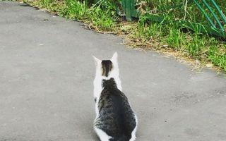 Aceste pisici sunt excepţia de la regulă. 20 de imagini amuzante