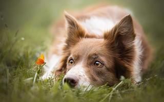 Cel mai fotogenic prieten al omului: 15 imagini care te fac să iubeşti câinii