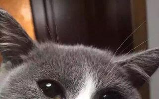 30 de pisicuţe care au fost înţepate de albine sau viespi. Imagini amuzante!