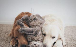 Adevărul despre câini şi pisici: Dovada că sunt cei mai buni prieteni!