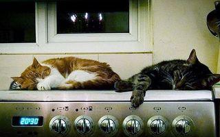 Pisicile se încălzesc oriunde se poate: În maşina de spălat şi pe aragaz!