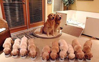 Cei mai fericiţi părinţi: Când câinii sunt foarte mândri de puii lor