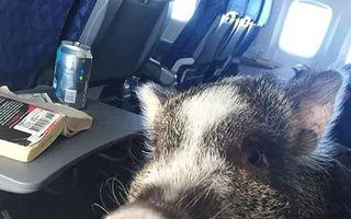 Când o zbura porcul: Iată dovada că se poate!