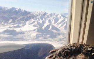 Cei mai neobişnuiţi pasageri la bordul unui avion. 25 de imagini bizare!
