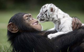 40 de imagini care arată că animalele ştiu ce înseamnă prietenia adevărată