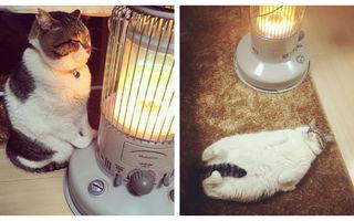 Busao, motanul care și-a găsit jumătatea. Este îndrăgostit de radiator!
