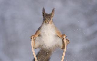 Olimpiada veveriţelor, un concurs cum nu s-a mai văzut