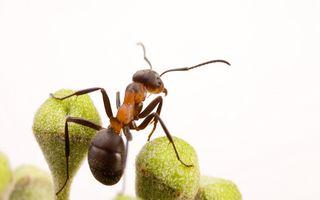 Mai avem de învăţat: Cum se ajută furnicile în caz de inundaţie - VIDEO