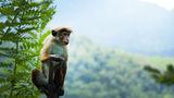 Oamenii de știință au clonat maimuțe pentru prima dată