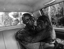Gorila care îşi îmbrăţişează salvatorul, o imagine memorabilă cu o poveste emoţionantă