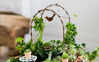 Cum să-ți faci o grădină în miniatură. 40 de idei