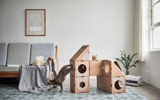 Ai pisică? Uite ce loc de joacă poţi să-i faci!