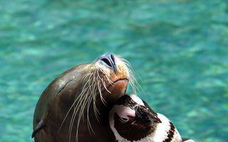 15 cele mai surprinzătoare prietenii din lumea animalelor