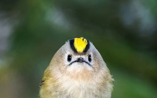Friguroase păsărele: Să vină primăvara mai repede!