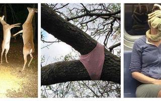 15 fotografii ciudate care te lasă fără cuvinte