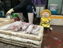 Motanul îmbrăcat, cel mai bun vânzător de peşte: E irezistibil!
