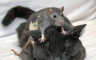 Tom și Jerry au făcut pace: 30 de imagini rare cu pisici și șoareci care se înțeleg perfect