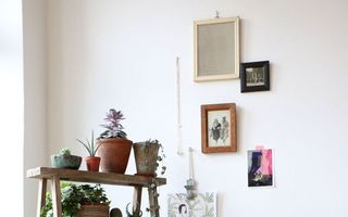 Cum să-ți decorezi casa folosind plantele de interior. 30 de idei