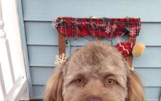 Câinele cu faţă de om: Nu-ţi poţi lua ochii de la el!