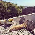 Şi pisicile fac yoga: Nimeni nu le întrece când se întind!