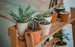 Trebuie să ai această plantă în casa ta. Elimină toate toxinele din aer!