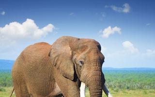 De ce fac elefanții atât de rar cancer?