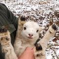15 animale atât de drăguţe încât îţi vine să le iei acasă